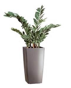 plante artificielle d int 201 rieur zamia pot kubis gris