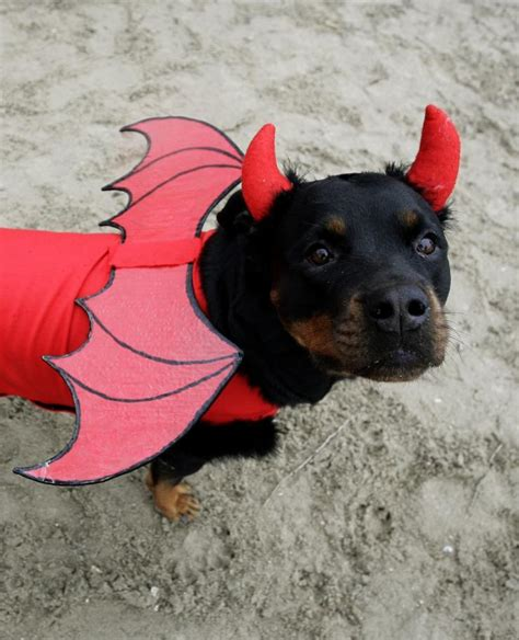 costumes for rottweilers costumes for dogs the cutest puppy costumes of 2011