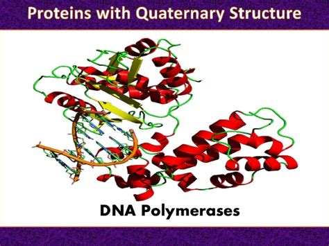protein quaternary structure the quaternary structure of protein