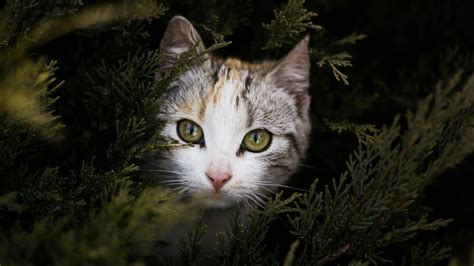 cat under wallpaper cat peeking out behind branches wallpaper mobile