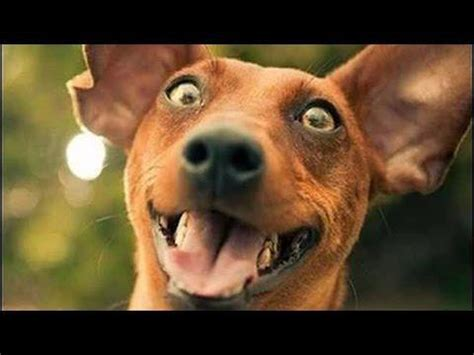 imagenes o videos chistosos im 225 genes de perros graciosos im 225 genes