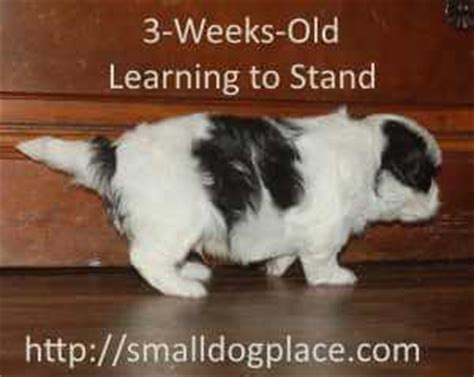 3 week puppy development puppy development stages step by step from birth to maturity