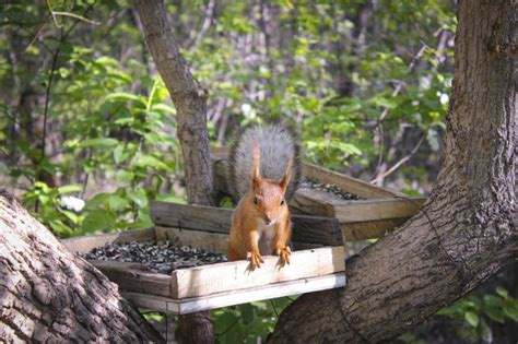 how to hunt squirrels in your backyard how to keep squirrels out of the bird feeder