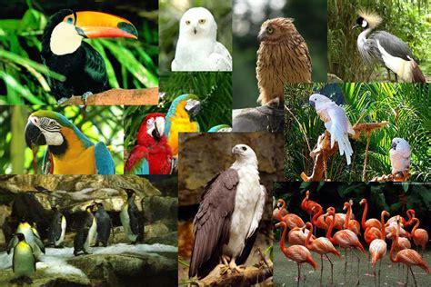 jurong bird park singapore okpunya com