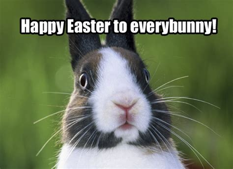 pinterest funny easter quotes quotesgram