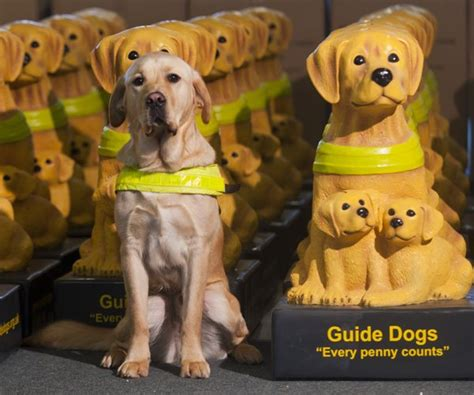 guide dogs for the blind guide dogs for the blind guide dogs suck uk