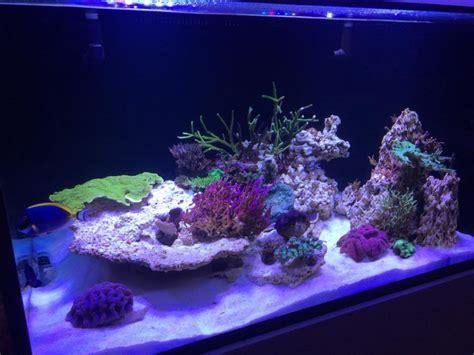 Lu Led Aquarium 2015 orphek client in the uk has updated his tank status orphek