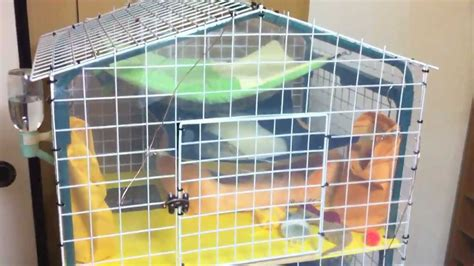 Easy Bookcase Plans Home Made Ferret Cage Made From A Garden Shelf Youtube