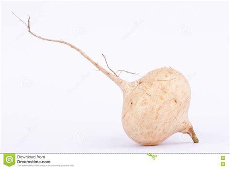 is yam a root vegetable yam bean jicama is bulbous root vegetable fruit stock