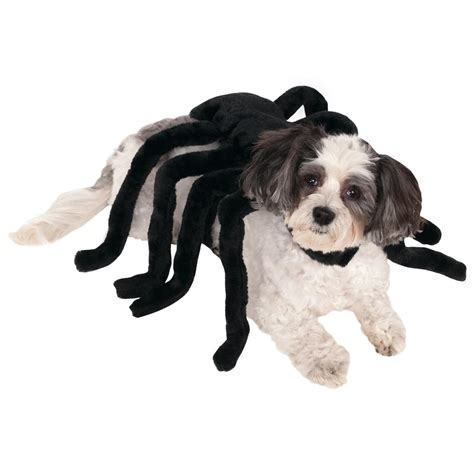 spider costume for dogs spider costume the animal rescue site