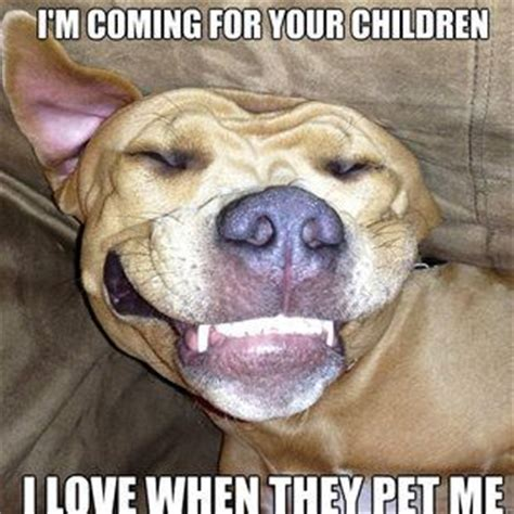 Pitbull Puppy Meme - funny studs and animals on pinterest