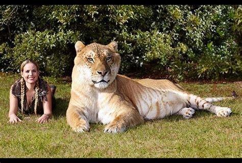 De Records 10 Mascotas Que Impusieron R 233 Cords Guinness Grupo Milenio