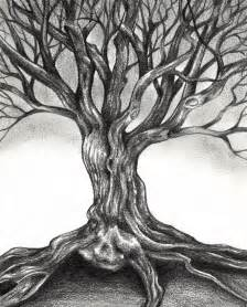 pencil sketches of trees gnarly tree drawing sophia
