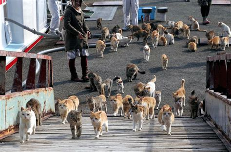 cat island japan it s like that quot cat lady quot but an photographer captures the army of felines on japan s cat