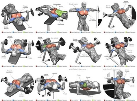 best fitness workout top chest exercises best fitness plan
