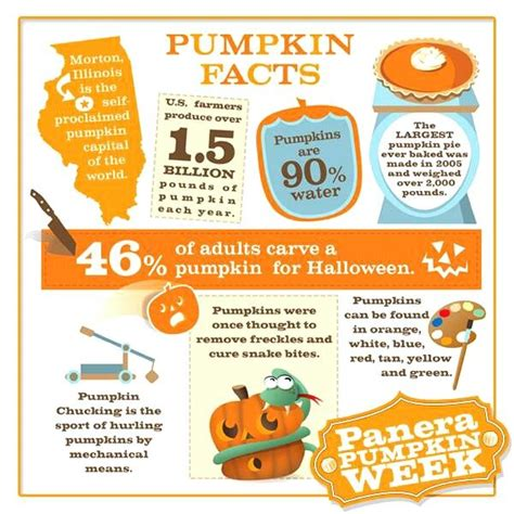 pumpkin facts pumpkin facts teaching ideas