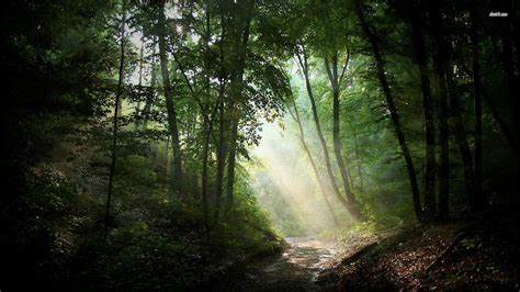 Samsung Galaxy S5 Casing Artwork Helpburn Quote sunlit path in the woods nature wallpaper cool