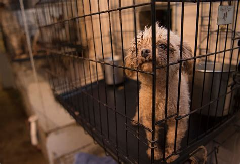 how to report a puppy mill is there a puppy mill in your neighborhood this report