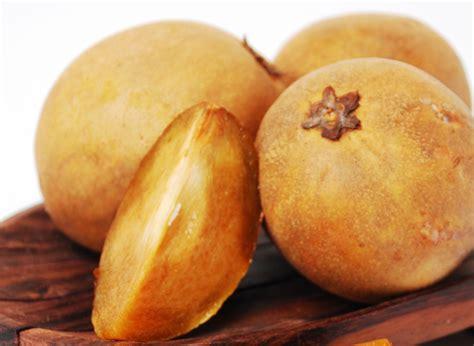 15 Benih Buah Sawo sawo pilih buah matang bebeja