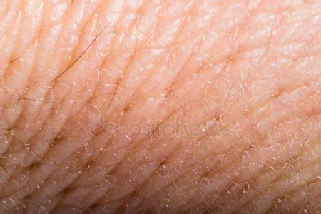 up texture of human skin with pores stock photo royalty free image 133633105 alamy skin pores texture stock photos royalty free skin pores texture images depositphotos 174