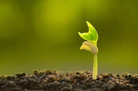 soil   garden clivia decoster