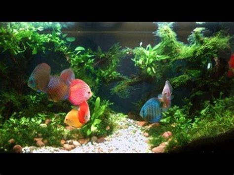 video aquascape discus biotope riparium elos 120 doovi