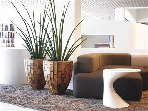plantas de interior para salon decorar con plantas de interior la casa