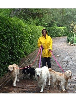 oprah s dogs oprah s real favorite things dogs and pets dogs oprah winfrey