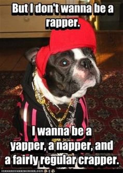 Bt Meme - 1000 images about boston terrier on pinterest boston