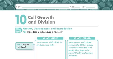 section 10 2 review section 10 1 cell growth answer key 28 images cell