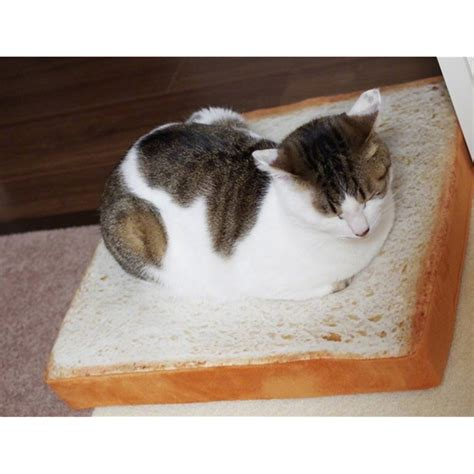 cozy and comfortable toasted bread plush pillow for cats toast cushion bread shape pet mat bed sponge pad for dog