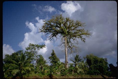 Giant Tropical Plants - rain forest amazon