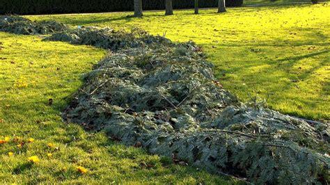 wann stauden umpflanzen stauden winterhart stauden winterhart mehrj hrig diese