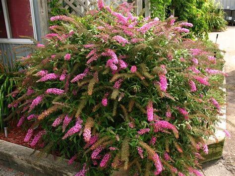 semi fiori perenni fiori da giardino perenni giardinaggio tipologie di