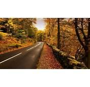 Download Autumn Nature Road Wallpaper  Full HD Wallpapers