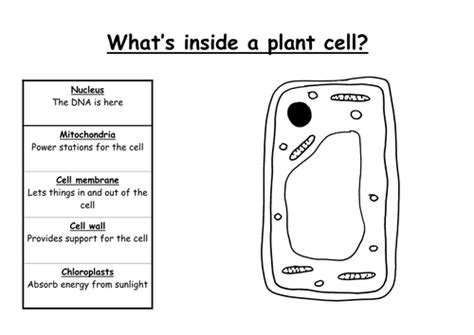 blank space japanese version ia simple plant cell without labels