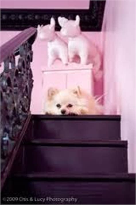 paris hilton dog house stairs in paris hilton s dog s house dog housez pinterest mansions paris