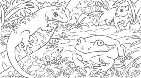 frog habitat coloring page coloring pages of madagascar color