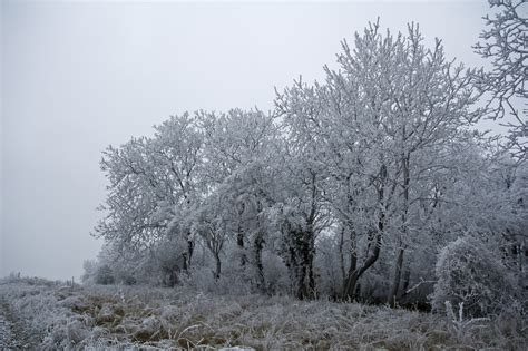 Frosty Tree - frosty trees am birting