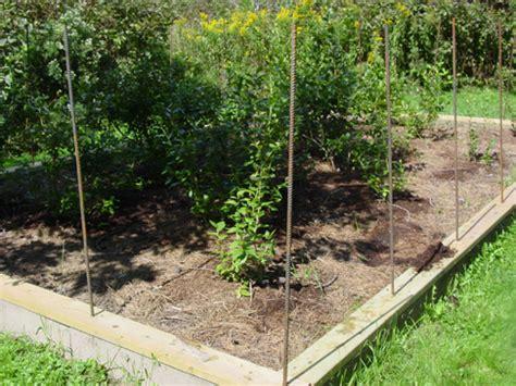 Blueberry Garden by Amish Blueberry Patch Genie In The Garden