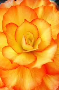 pretty orange best 25 orange flower pictures ideas on pinterest
