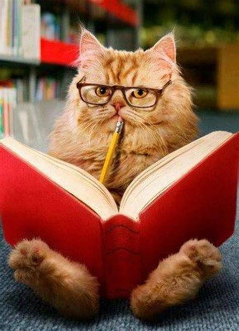 23 best images about cats reading books on