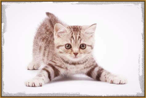 imagenes geniales de gatos imagenes de felinos para descargar los gatitos m 225 s