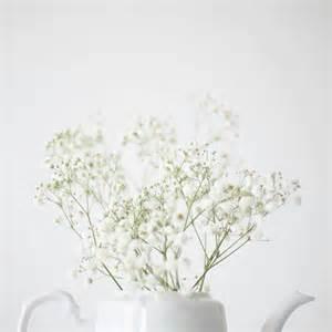 aesthetic white mochuuu