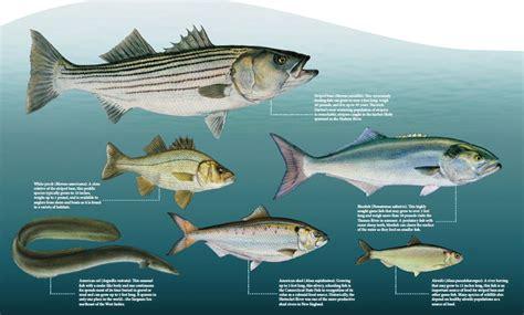 thames river fishing ct thames river ct fishing report reportz80 web fc2 com