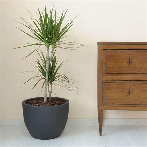 vaso in resina da esterno vaso da esterno in resina arredo giardino
