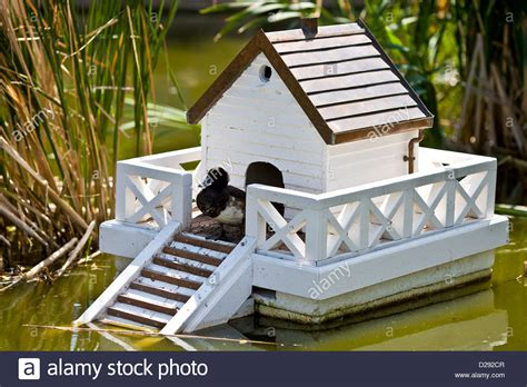 Floating Duck House On The Pond Stock Photo 53059911 Alamy