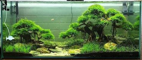 how to make aquascape how to create a beautiful aquascape