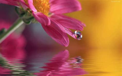 imagenes de flores sobre el agua poemas de una mujer un mar en calma poemas al agua para
