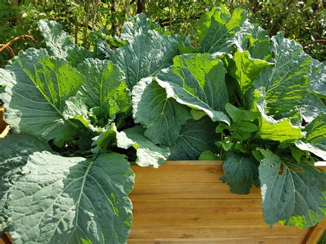 Garten Was Pflanzen Im August by Was Pflanze Ich Im Juli Ins Hochbeet Ostseesuche